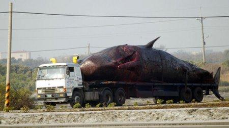 В Тайвани взорвался кит [9 фото]