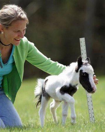 Самая маленькая лошадка в мире [10 фото]