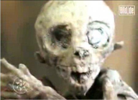 В Мексике нашли мертвого пришельца [4 фото]