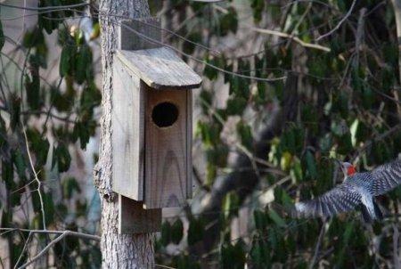 Какой-то бурундук украл дом у птицы [4 фото]