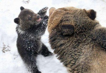 Медвежонок и Медведь [4 фото]