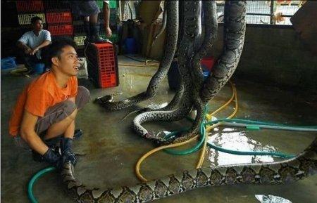 Цех по разделке змей в Китае [6 фото]