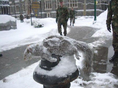 Фото замерзших [9 фото]