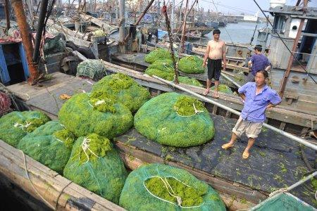 Атака водорослей [6 фото]
