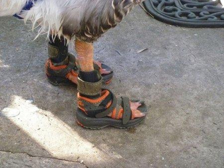 Обувь для гуся [4 фото]
