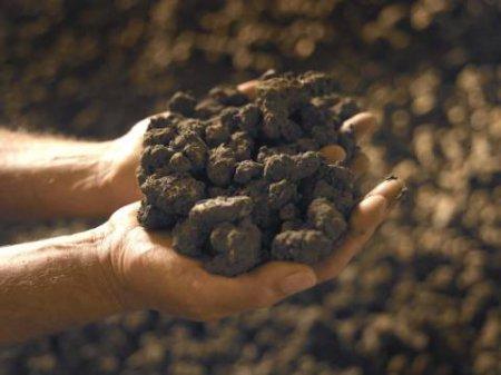 Употребление земли в пищу избавит от болезней