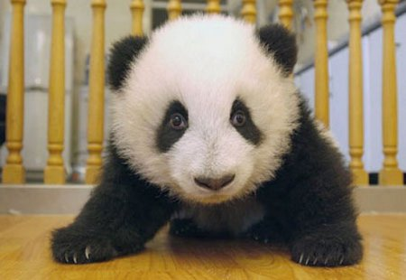 Как растет панда [7 фото]