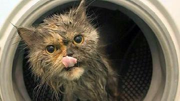 Котенок выжил, после того как час провел в работающей стиральной машине