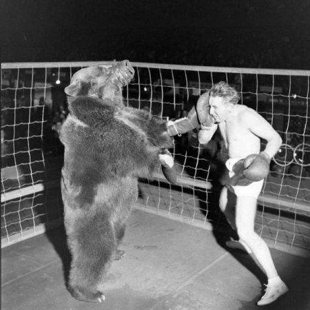 Бокс с медведем [6 фото]