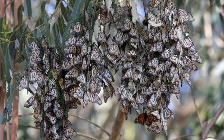 Нашествие бабочек [8 фото]
