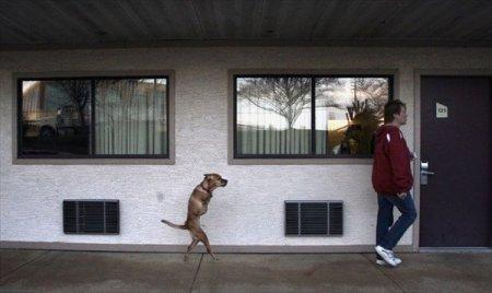 Прямоходящая собака [3 фото]