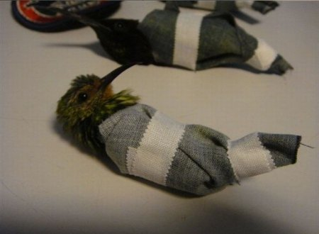 Контрабанда колибри [5 фото]