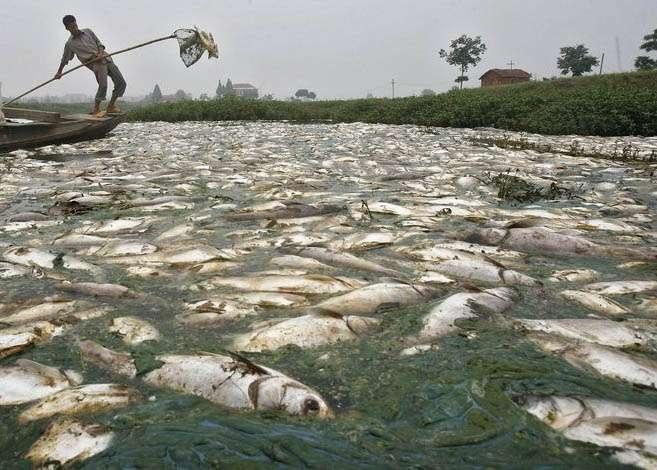 Раньше местные рыболовы ловили в реке