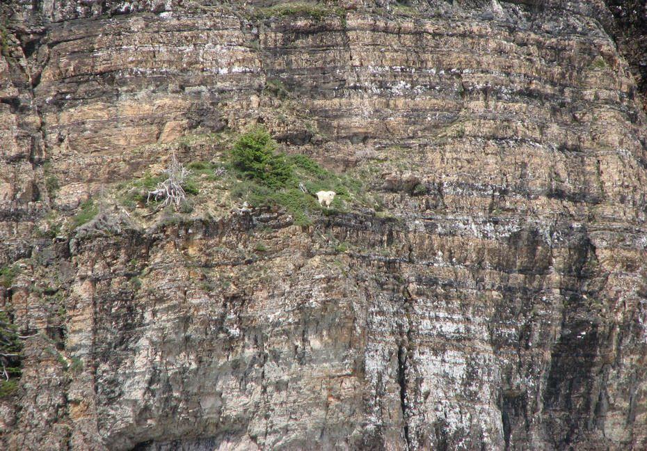 Ибексы - козы-скололазы [8 фото]