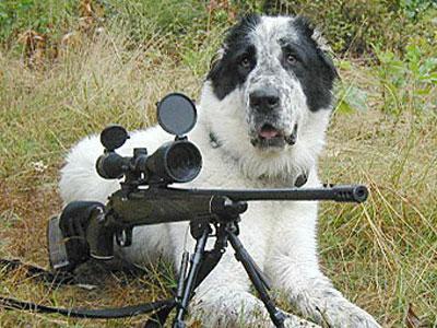 Пес выстрелил из ружья в пятую точку своему хозяину